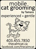 The Calm Cat - Mobile Cat Grooming