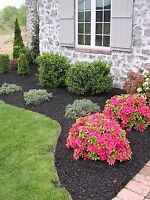 Hedge trimming and landscaping