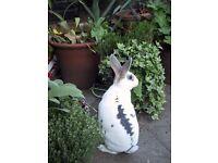 Gorgeous female x Rex lionhead Rabbit
