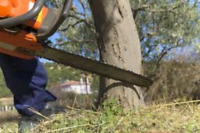 PROFESSIONAL TREE  & STUMP REMOVAL SERVICE 647-607-4924.