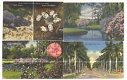 Florida Postcard Lot