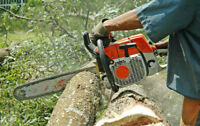 TREE CUTTING, LOT CLEARING