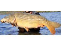 Carp fishing tackle/setup wanted