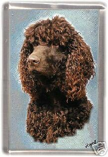 Irish Water Spaniel Fridge Magnet No 1 by Starprint