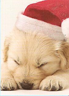 Golden Retriever Sleeping Santa Christmas Cards Box 15