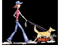 Pirn Paws. Professional, reliable and friendly dog walkers.