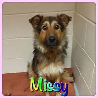FEMALE COLLIE CROSS - SOHR RESCUE - MISSY