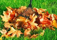 FALL CLEAN UP*LEAVES REMOVAL*EAVESTROUGH CLEANING  4Season's