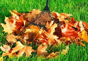 SPRING CLEAN UP*LEAVES REMOVAL*EAVESTROUGH CLEANING  4Season's
