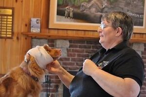 Pet First Aid Course-Walks'N Wags   Oct 29