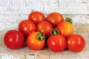 """Cherry Tomato Plant (""""A Grappoli D'Inverno"""") in Terracotta Pots Coolbellup Cockburn Area Preview"""