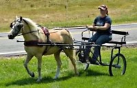 Assisting with horses