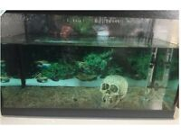 Fish tank with gravel, skull & tree root ornament