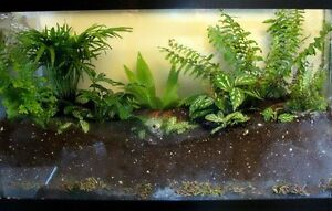 looking for live plants for plant terraurim