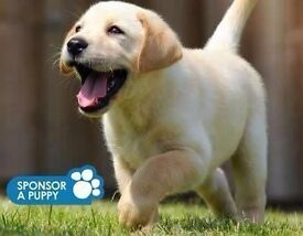 Guide Dogs For The Blind- Door to Door Fundraiser- Lincoln - £7.50-£8.50 Per Hour - OTE £22k - £30k