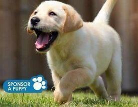 Guide Dogs For The Blind- Door to Door Fundraiser- Kent - £7.50- £8.50 Per Hour - OTE £22k - £30k