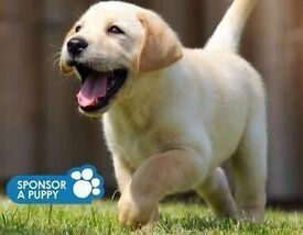 Guide Dogs For The Blind - Street Fundraiser - Southampton (OTE £14.70 per hour) (Immediate Start)