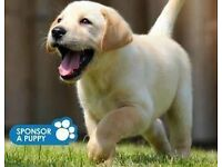 Street Fundraisers- Guide Dogs for The Blind Edinburgh £9/hour + Bonus