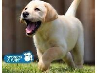Guide Dogs For The Blind- Door to Door Fundraiser- Bristol- £7.50 -£8.50 ph- OTE £22k - £30k