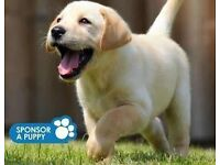 Guide Dogs For The Blind - Venue/Private Site Fundraiser - London (£9 per hour) (Immediate Start)