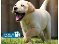 Guide Dogs for the Blind- Street Fundraising Team Leader - £10/hour - Edinburgh