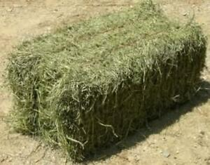 Excellent quality horse hay