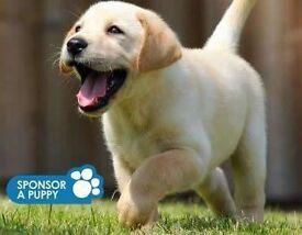 Guide Dogs For The Blind - Door to Door Fundraiser - Brighton - £7.50-£8.50 ph - OTE £22k - £30k