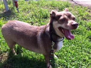 "Adult Male Dog - Mixed Breed: ""Papi"""