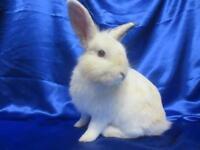 "Baby Male Rabbit - Bunny Rabbit: ""Ross"""