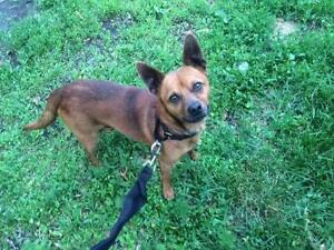 """Adult Male Dog - Mixed Breed: """"Ky"""""""