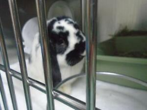 "Baby Male Rabbit - Bunny Rabbit: ""Oreo"""