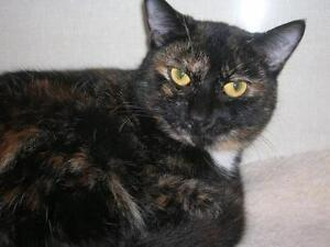 "Young Female Cat - Tortoiseshell: ""Melva"""