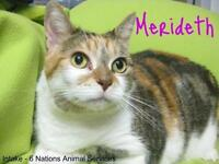 "Adult Female Cat - Calico: ""Merideth"""