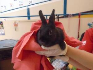 "Baby Female Rabbit - Bunny Rabbit: ""Croquette"""