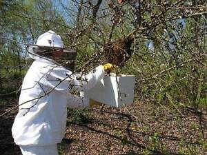 Free Bee Swarm Removal West Ryde Ryde Area Preview
