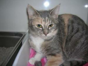 "Young Female Cat - Tabby: ""Three"""