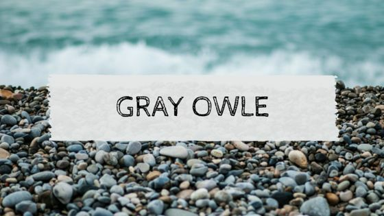 The Gray Owle Shop
