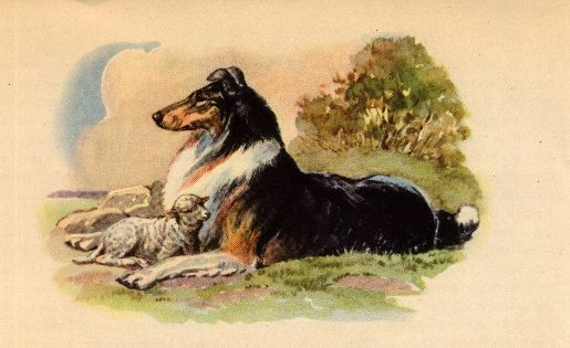 Collie and Lamb - Dog Art Print - Megargee MATTED