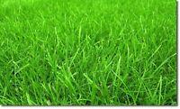 Lawn/Grass Cutting