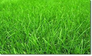 Aeration/Power Rake/Cut&Trim - Cheap Professional Lawn Care