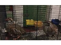 Partridges for sale