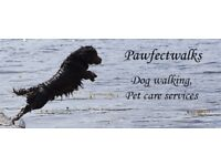 Pawfect Walks - Experienced dog handler, Insured, DBS, Single or Group walks. Daycare available.