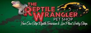 New arrivals this week at The Reptile Wrangler Pet Shop
