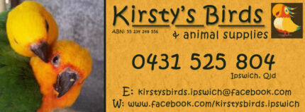 KIRSTY'S BIRDS IPSWICH! Ipswich Ipswich City Preview