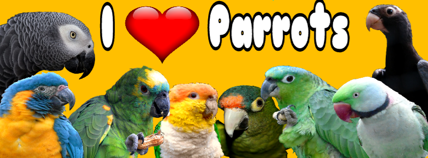 Parrot_world