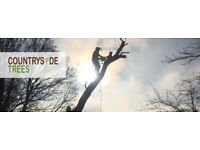 Countryside trees. Qualified tree surgeons
