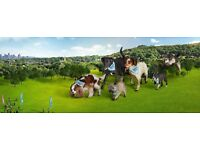 Bristol BIG Walkies - RSPCA Bristol and District Branch sponsored dog walk