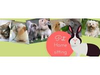Pet Home Visits & Sitting - Totton, Romsey, Calmore, Southampton