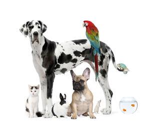 Pawz 'n Clawz Dog Walking and Pet Care