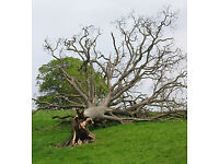 Trees wanted, Dead Fallen or unwanted trees wood wanted. Chainsaw arborist